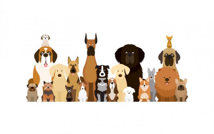 Pet Licenses